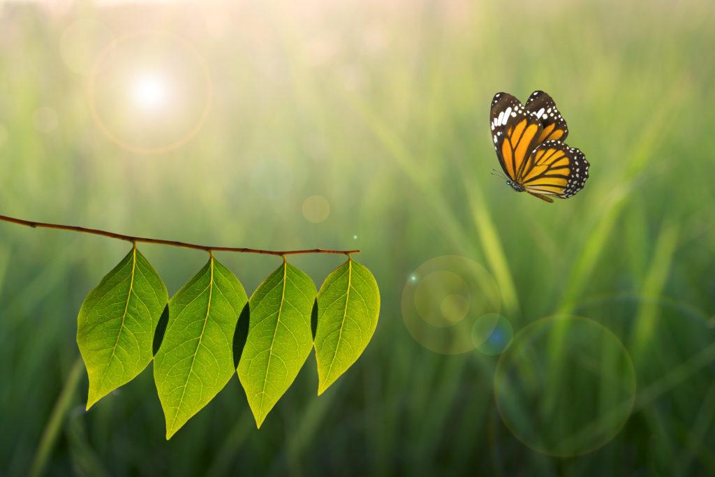 Die Umwelt liegt uns am Herzen